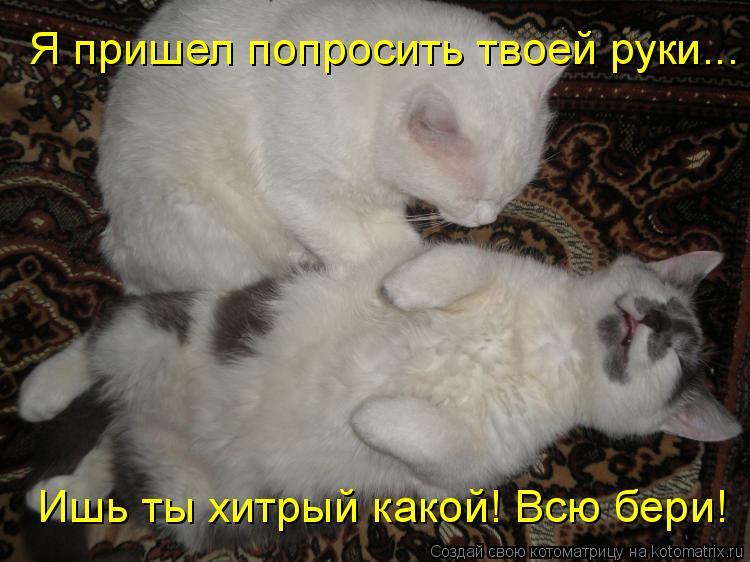 Котоматриця!)))) R4