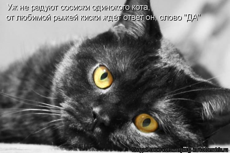 Не котенка, а именно кота - со своей историей, судьбой, 9 жизнями за плечами.