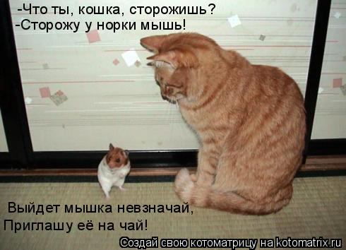 Котоматрица: -Что ты, кошка, сторожишь? -Сторожу у норки мышь! Выйдет мышка невзначай, Приглашу её на чай!
