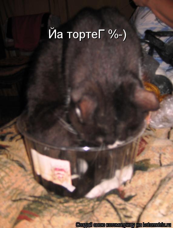 Котоматрица: Йа тортеГ %-)