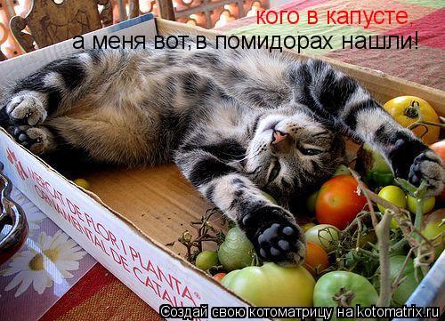 Котоматрица: кого в капусте, а меня вот в помидорах нашли! ,
