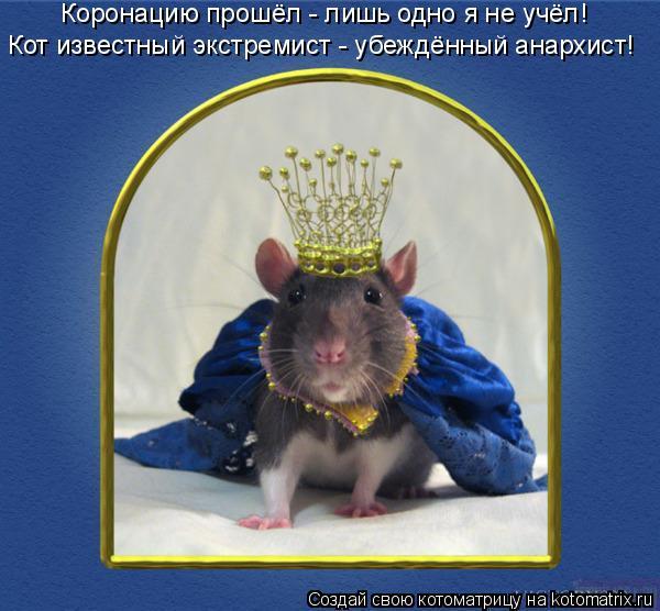 Котоматрица: Коронацию прошёл - лишь одно я не учёл! Кот известный экстремист - убеждённый анархист!