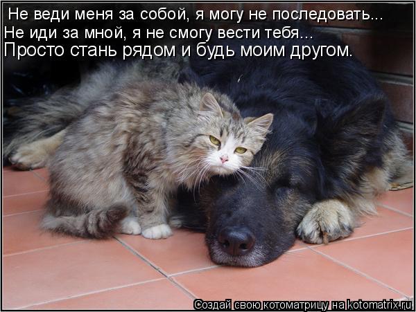Котоматрица: Не веди меня за собой, я могу не последовать... Не иди за мной, я не смогу вести тебя... Просто стань рядом и будь моим другом.