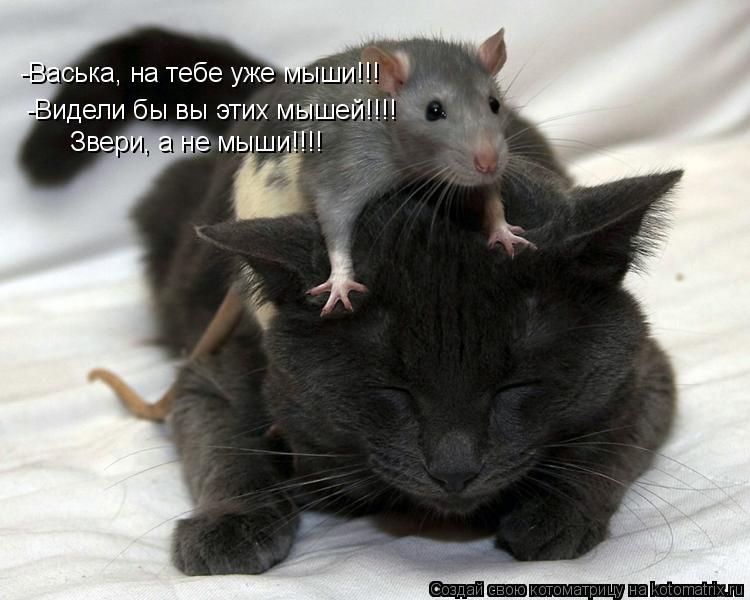 не важно какого цвета кошка главное чтобы она ловила мышей сказал