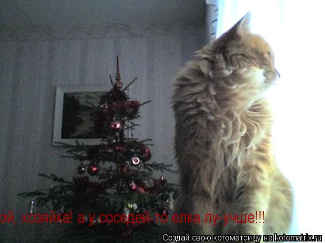 Котоматрица: эй, хозяйка! а у соседей-то елка лу-учше!!!