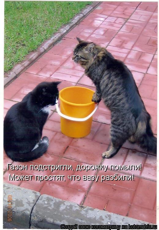 Котоматрица: Газон подстригли, дорожку помыли! Может простят, что вазу разбили!