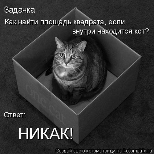 Котоматрица: Задачка:  Как найти площадь квадрата, если внутри находится кот?  Ответ:  НИКАК!