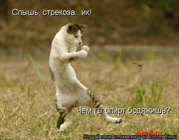Котоматрица: Слышь, стрекоза...ик! Чем ты спирт бодяжишь?...