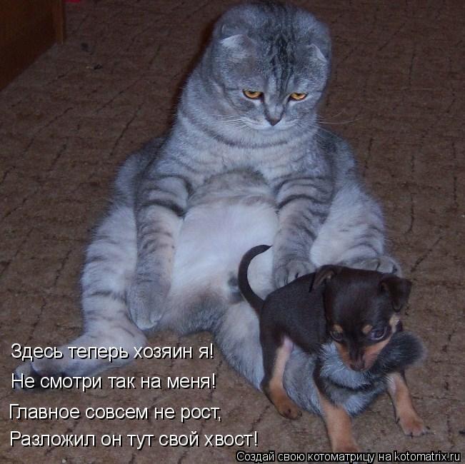 Котоматрица: Разложил он тут свой хвост! Главное совсем не рост, Здесь теперь хозяин я! Не смотри так на меня!