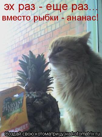 Котоматрица: эх раз - еще раз... вместо рыбки - ананас!