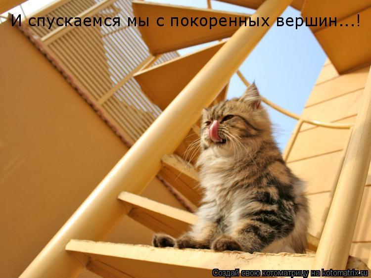 Котоматрица: И спускаемся мы с покоренных вершин...!