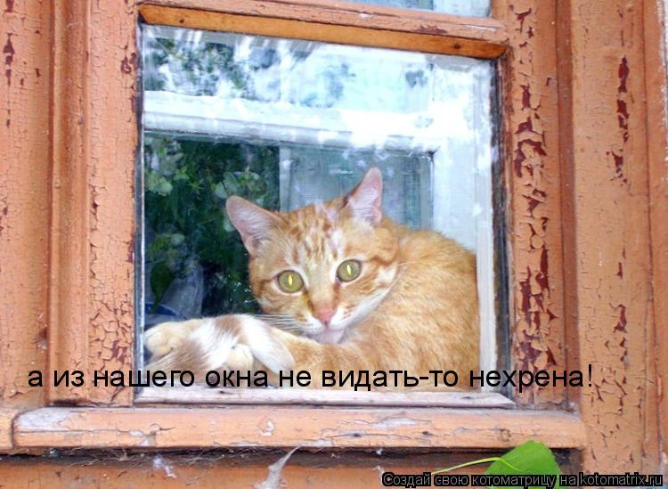 Котоматрица: а из нашего окна не видать-то нехрена!
