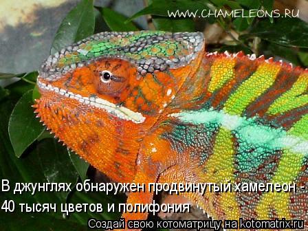 Котоматрица: В джунглях обнаружен продвинутый хамелеон -  40 тысяч цветов и полифония