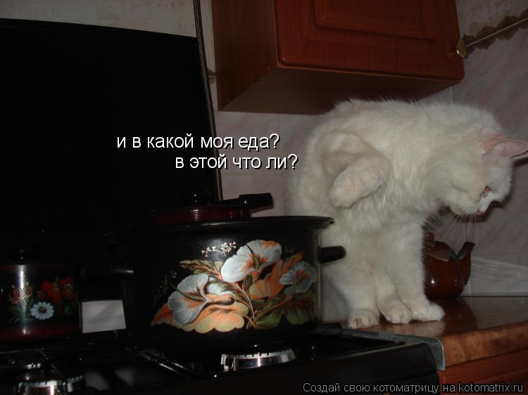 Котоматрица: и в какой моя еда? в этой что ли?