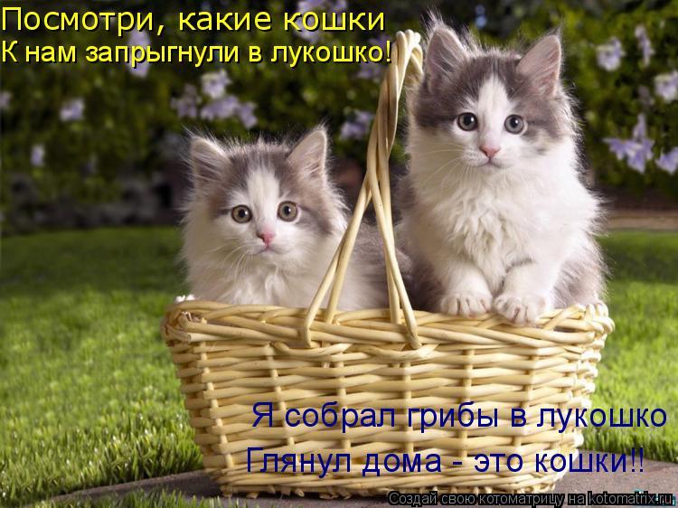 Котоматрица: Посмотри, какие кошки К нам запрыгнули в лукошко! Я собрал грибы в лукошко Глянул дома - это кошки!!
