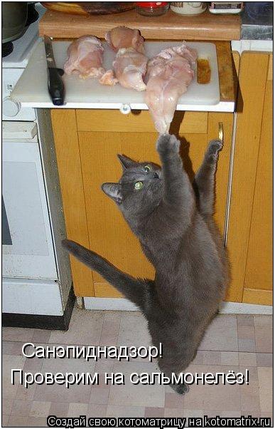 Котоматрица: Санэпиднадзор! Проверим на сальмонелёз!