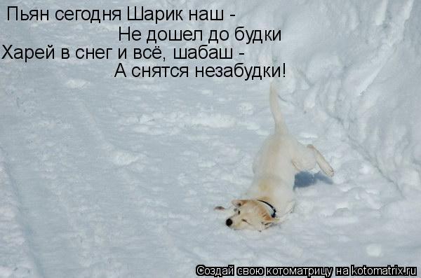Котоматрица: Не дошел до будки Пьян сегодня Шарик наш -  Харей в снег и всё, шабаш -  А снятся незабудки!