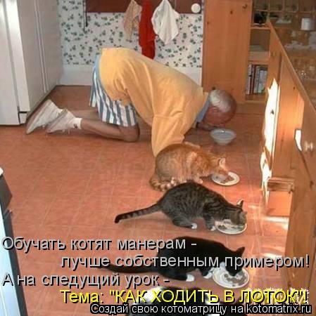 """Котоматрица: Обучать котят манерам - лучше собственным примером! А на следущий урок - Тема: """"КАК ХОДИТЬ В ЛОТОК""""!"""