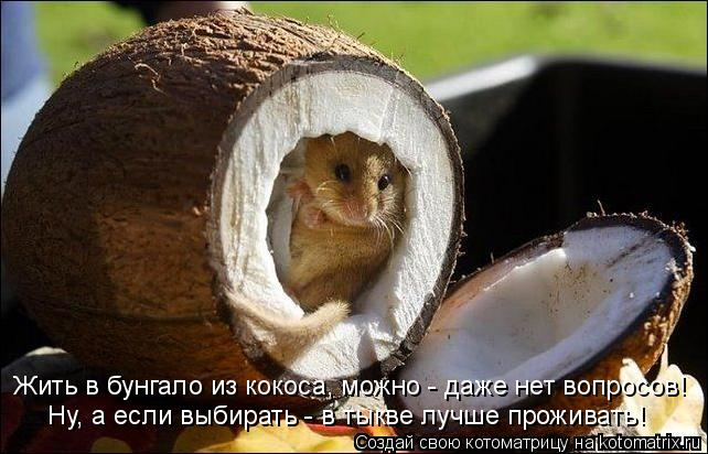 Котоматрица: Жить в бунгало из кокоса, можно - даже нет вопросов! Ну, а если выбирать - в тыкве лучше проживать!