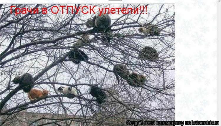 Котоматрица: Грачи в ОТПУСК улетели!!!