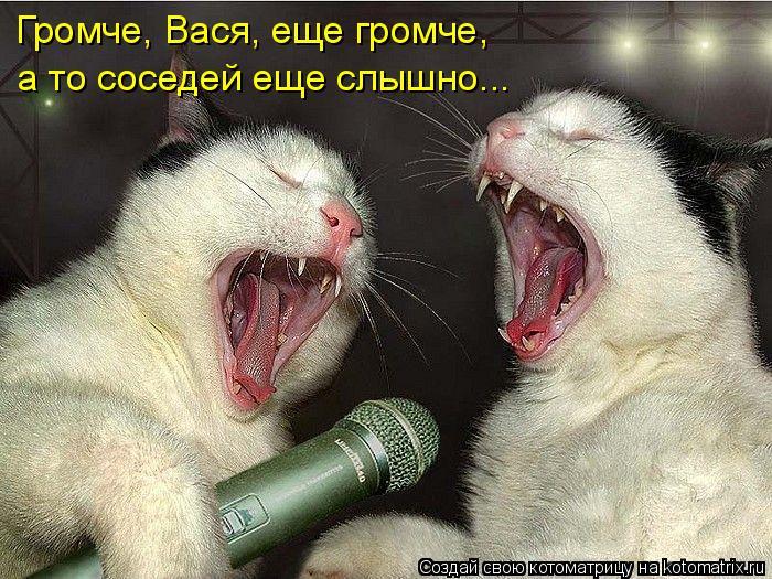 Котоматрица: Громче, Вася, еще громче, а то соседей еще слышно...