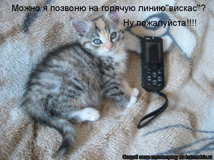 """Котоматрица: Можно я позвоню на горячую линию""""вискас""""? Ну пожалуйста!!!!"""