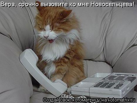 Котоматрица: Вера, срочно вызовите ко мне Новосельцева!