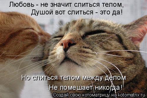 Котоматрица: Любовь - не значит слиться телом, Душой вот слиться - это да! Но слиться телом между делом Не помешает никогда!