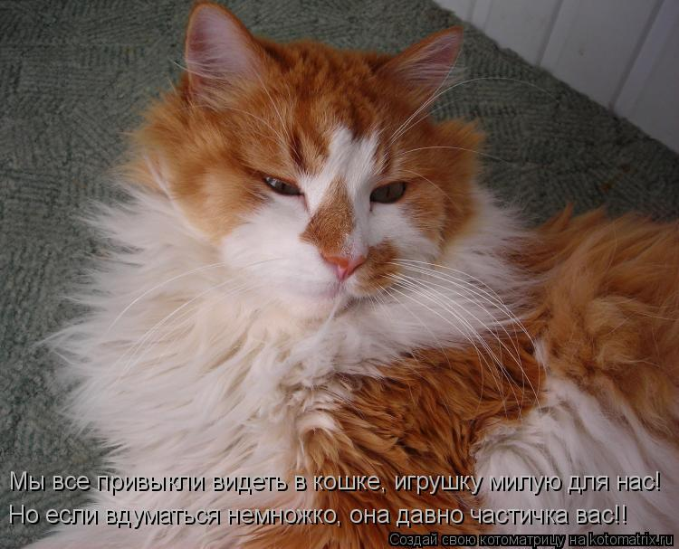 Котоматрица: Но если вдуматься немножко, она давно частичка вас!! Мы все привыкли видеть в кошке, игрушку милую для нас!