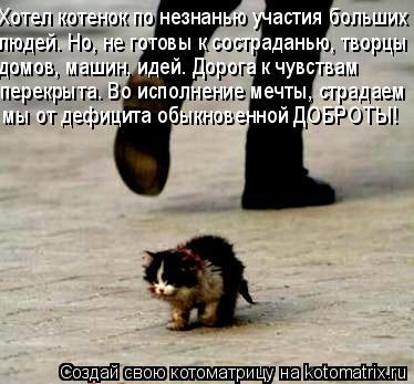 Котоматрица: Хотел котенок по незнанью участия больших  людей. Но, не готовы к состраданью, творцы  домов, машин, идей. Дорога к чувствам  перекрыта. Во исп