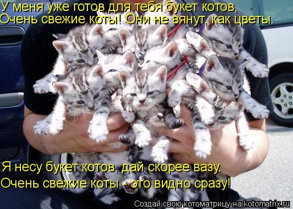 Котоматрица: У меня уже готов для тебя букет котов, Очень свежие коты! Они не вянут, как цветы.  Я несу букет котов, дай скорее вазу. Очень свежие коты - это