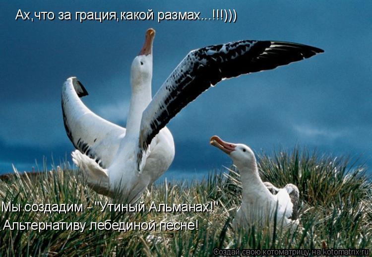 """Котоматрица: Ах,что за грация,какой размах...!!!))) Мы создадим - """"Утиный Альманах!"""" Альтернативу лебединой песне!"""