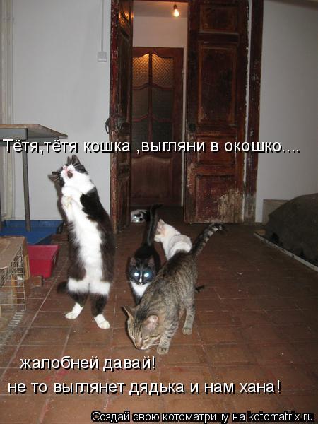 Котоматрица: Тётя,тётя кошка ,выгляни в окошко.... жалобней давай! не то выглянет дядька и нам хана!