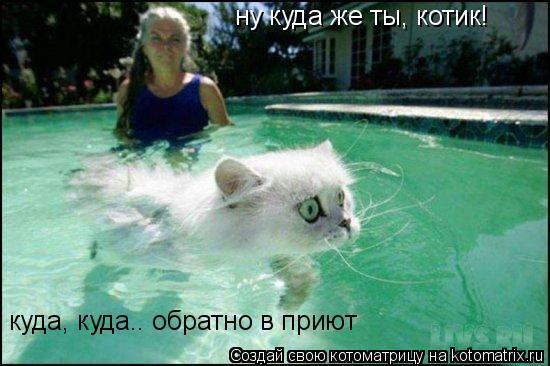 Котоматрица: ну куда же ты, котик! куда, куда.. обратно в приют