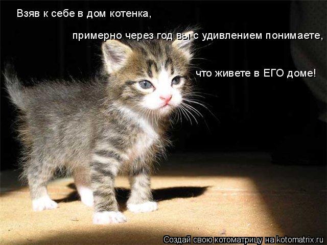 Котоматрица: примерно через год вы с удивлением понимаете,  Взяв к себе в дом котенка,  что живете в ЕГО доме!