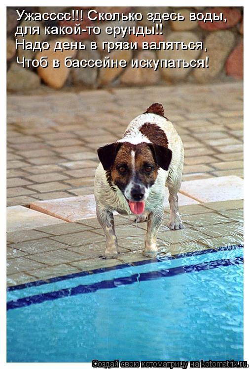 Котоматрица: Ужасссс!!! Сколько здесь воды, Надо день в грязи валяться, Чтоб в бассейне искупаться! для какой-то ерунды!!