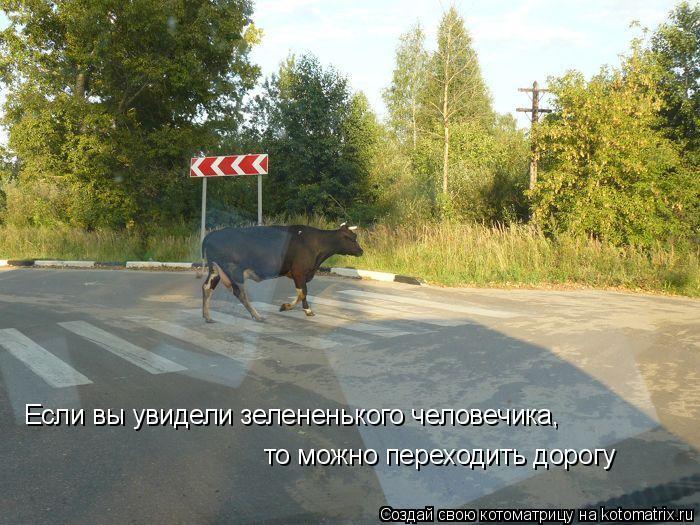Котоматрица: Если вы увидели зелененького человечика, то можно переходить дорогу