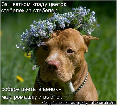 Котоматрица: За цветком кладу цветок,  стебелек за стебелек,  соберу цветы в венок -  мак, ромашку и вьюнок
