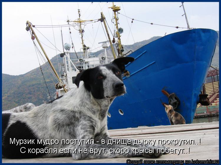 Котоматрица: Мурзик мудро поступил - в днище дырку прокрутил..! С корабля если не врут, скоро крысы побегут..!