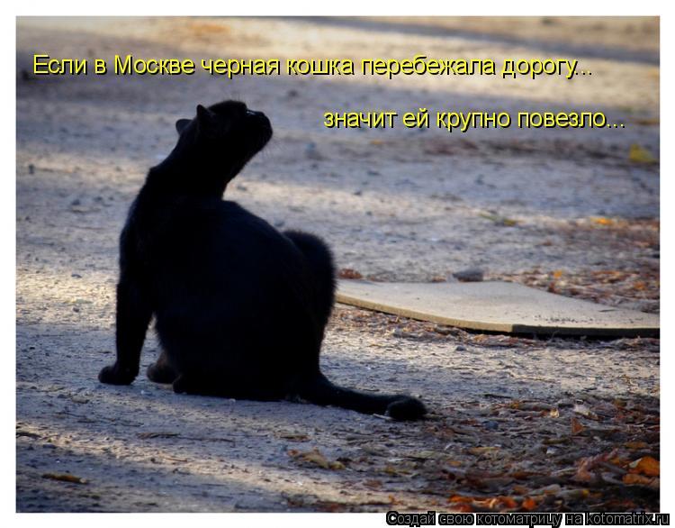Котоматрица: Если в Москве черная кошка перебежала дорогу... значит ей крупно повезло...