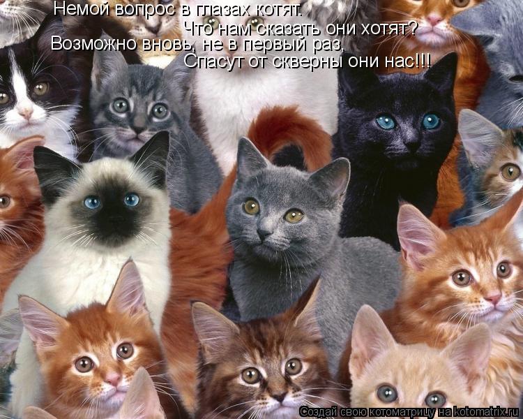 Котоматрица: Немой вопрос в глазах котят.  Что нам сказать они хотят? Возможно вновь, не в первый раз, Спасут от скверны они нас!!!