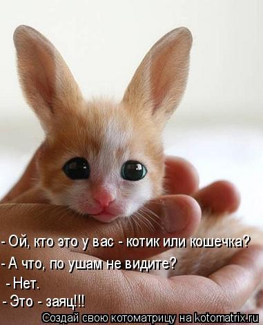 Котоматрица: - Ой, кто это у вас - котик или кошечка?  - А что, по ушам не видите?  - Нет.  - Это - заяц!!!