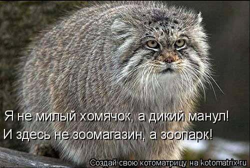 Котоматрица: Я не милый хомячок, а дикий манул! И здесь не зоомагазин, а зоопарк!