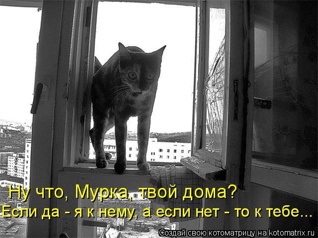Котоматрица: Ну что, Мурка, твой дома?  Если да - я к нему, а если нет - то к тебе...