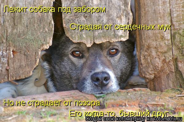 Котоматрица: Лежит собака под забором Страдая от сердечных мук Но не страдает от позора  Его когда-то, бывший друг.