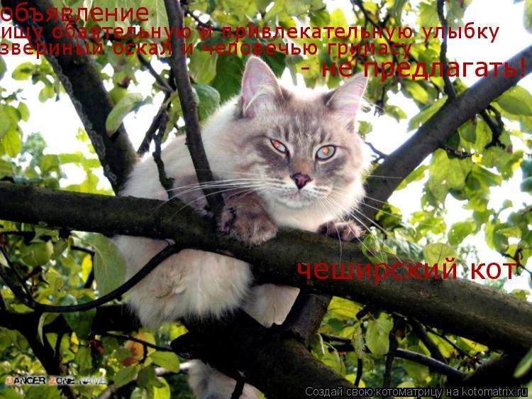 Котоматрица: объявление ищу обаятельную и привлекательную улыбку звериный оскал и человечью гримасу - не предлагать! чеширский кот