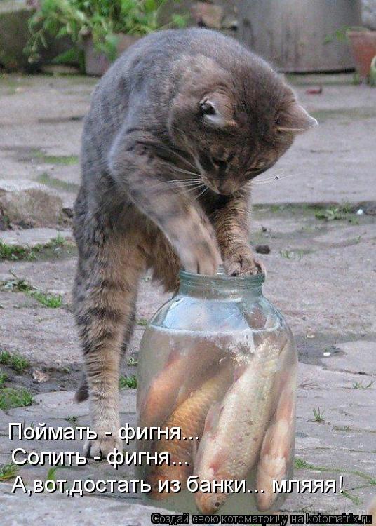 Котоматрица: Поймать - фигня... Солить - фигня... А,вот,достать из банки... мляяя!