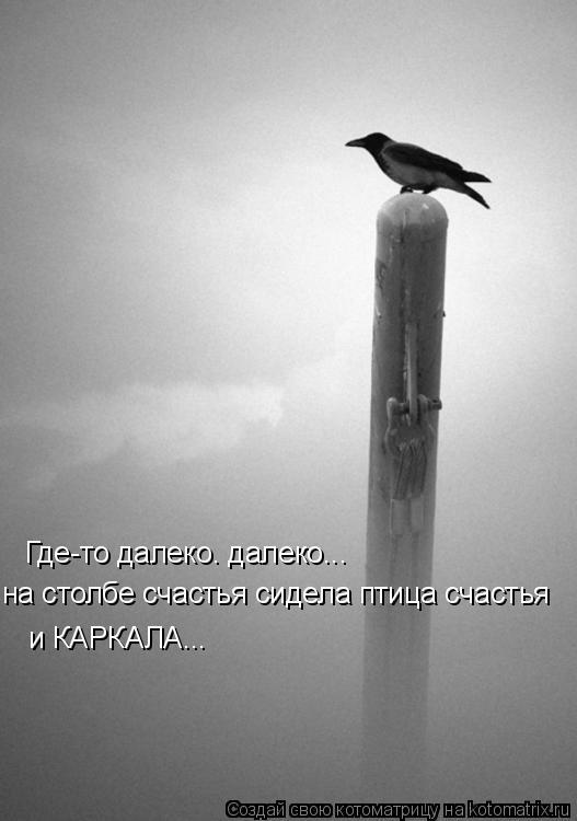 Котоматрица: Где-то далеко. далеко... на столбе счастья сидела птица счастья и КАРКАЛА...