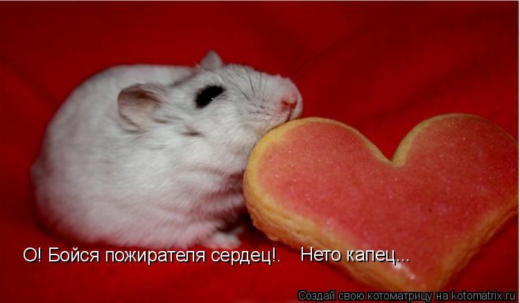Котоматрица: О! Бойся пожирателя сердец!. Нето капец...