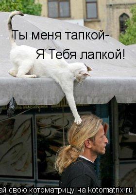 Котоматрица: Ты меня тапкой Я Тебя лапкой! -